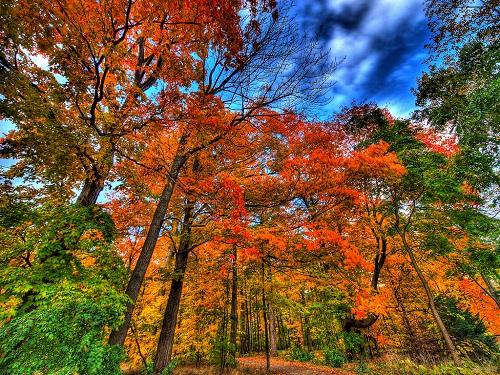 autumn falls - Ladies Tend to Hibernate When Fall Starts